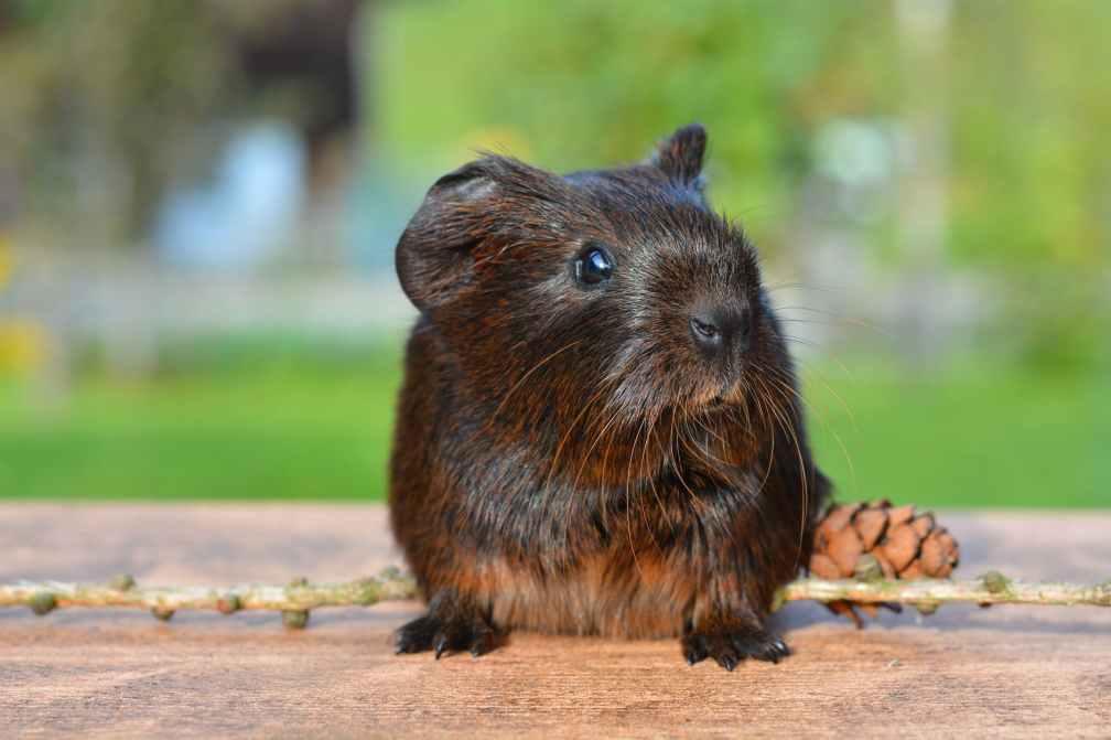 animal pet cute brown