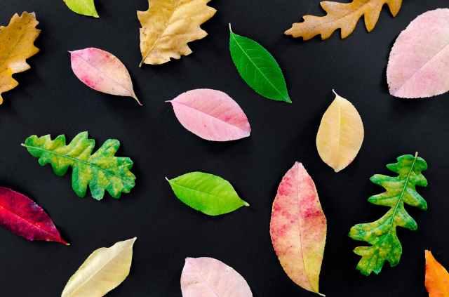 autumn dry fall foliage